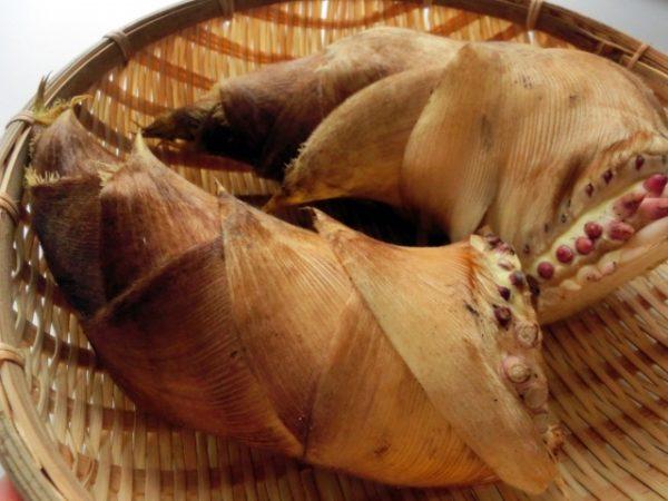 竹の子 えぐ み
